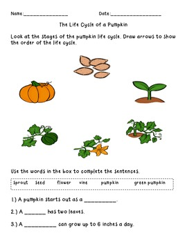 Science Passages for the Pumpkin Life Cycle