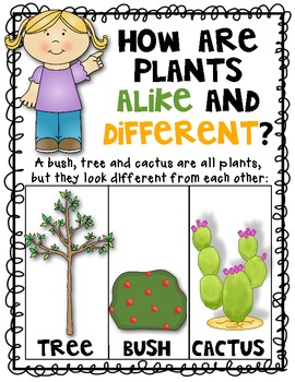 Science Plant Posters {Set of 4} Alike and Different