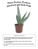 Science: Plant Products Assessment and Study Guide