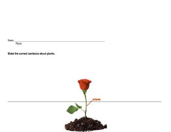 Science Plants Building Sentences