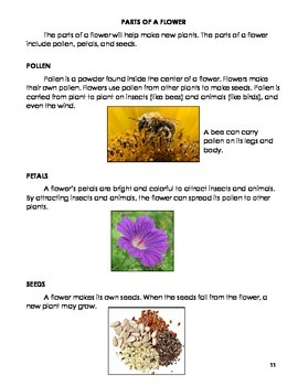 Science: Plants Workbook (Plant Needs & Life Cycle, Parts of Plants/Flowers)
