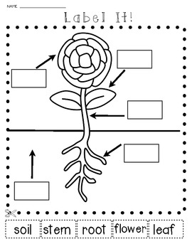 science plants and seeds let 39 s label it cut and paste activities. Black Bedroom Furniture Sets. Home Design Ideas