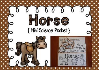 Horse - Science Pocket