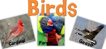 Science Poster-Birds