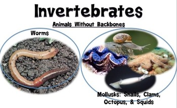 Science Poster-Invertebrate
