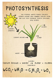 Science Poster - Photosynthesis