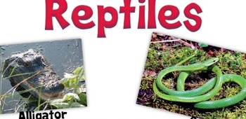 Science Poster-Reptile