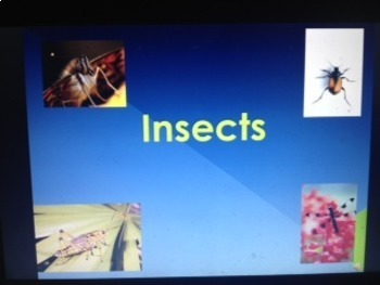 Science PowerPoint BUNDLE (Insects/Matter) - FOSS