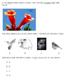 Science Quiz: Grade 4: NYS: Plants