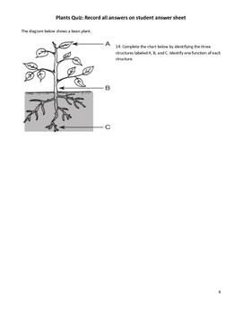 Middle School Science Quiz - Plants