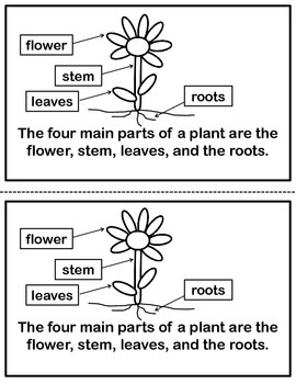 Science Reader - Plants