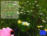 Science Reading Fluency & Comprehension Task Cards bundle