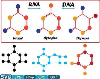 Science School Molecules atom molecule SVG DNA RNA structu