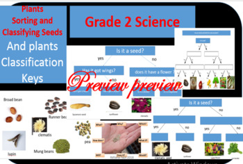 Science Sorting and Classifying seeds and plants