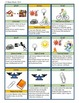 Science Stuff - Science Vocabulary Card Game