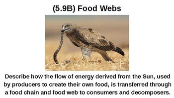 Science TEKS 5.9B REVIEW (Food Chains, Food Webs)