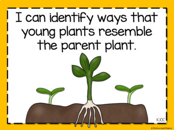 Science TEKS Posters for Kindergarten- Editable