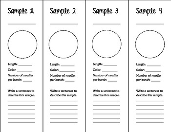 Science Techbook - 3rd Grade - Needles Observation Foldable