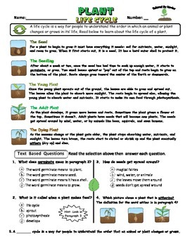 Science Test: Plant Life Cycle