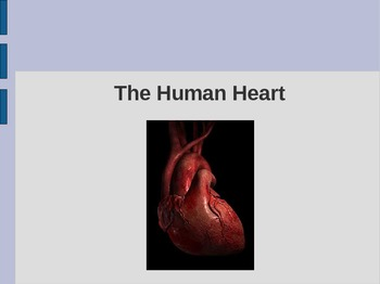 Heart PowerPoint: Circulation, Chambers, Vessels, & Valves -Science: Anatomy