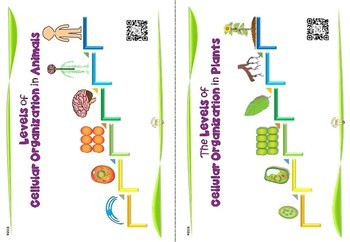 Science: The Levels of Cellular Organization Handouts for Interactive Notebook