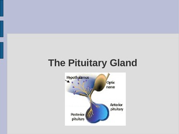 Pituitary Gland PowerPoint: Hormones & Diseases - Science: Anatomy / Health