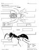 Science Through Literature: Spiders