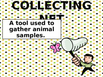 Science Tools for Young Scientists Word Wall