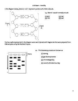 High School Biology Unit Exam - Heredity, Genetics, & DNA