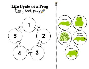 Science Unit: Life Cycles