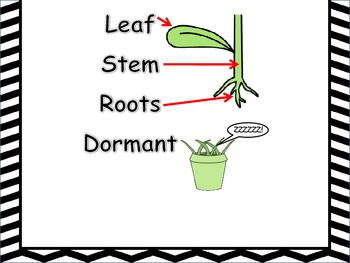 Science Vocabulary Anchor Chart~ Plants