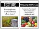 Science Vocabulary Cards