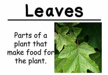 Science Vocabulary Cards: Plant Diversity (Large)