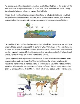 Science Vocabulary for Ecosystems (English and Spanish)