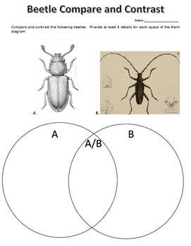 Science Warmup Compare and Contrast Beetles