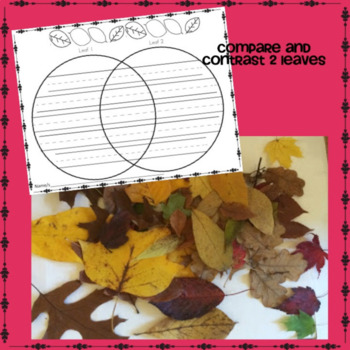 Science: What Can You Do with a Pile of Leaves?