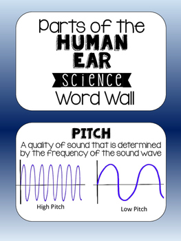 Science Word Wall - Parts of the Human Ear