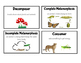 Science Word Wall Vocabulary Picture Cards