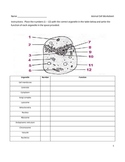Middle School Biology Worksheet - Animal Cell Diagram