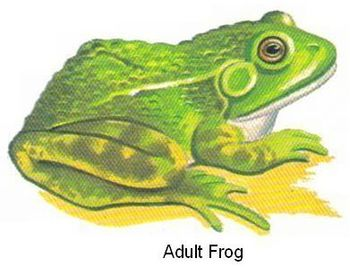 Compare/Contrast Frogs and Toads Science Worksheet + 20 Re