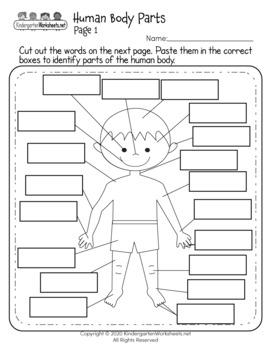Science Worksheets for Kindergarten (50 Worksheets) by ...
