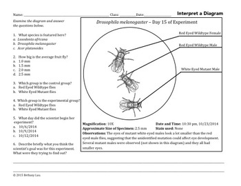 Lab Report Writing Skills How to Create a Lab Diagram and Cut and Paste Activity