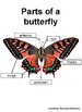 Science anchor charts, Science posters, apple, pumpkin, butterfly, skeleton, bat
