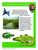 Science and Art: Habitats: Life in the Wetlands - Everglades National Park