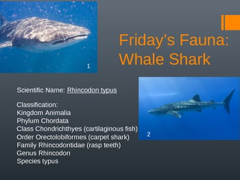Science by Squell: FREE Friday's Fauna - A Fun Way to Teach Key Concepts