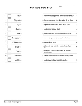 Science in French: The Parts of a Flower (Worksheets)