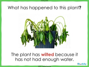 Plants and Water