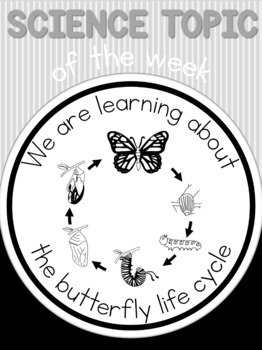 Science topic of the week poster - Butterfly life cycle