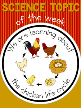 Science topic of the week poster - Chicken life cycle