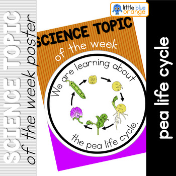 Science topic of the week poster - Pea life cycle